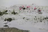 金獅湖的早晨:IMG_2825.JPG