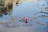 金獅湖的早晨:IMG_2791.JPG