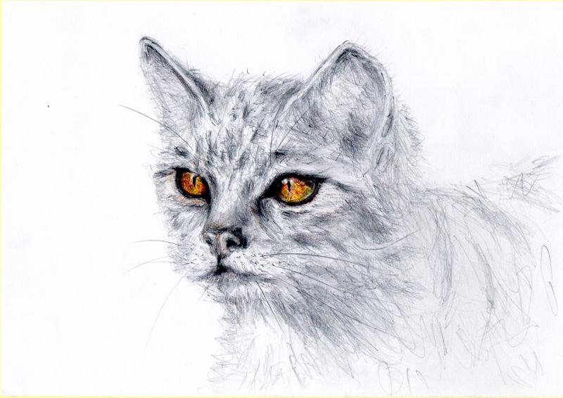 3歐洲野貓二分之一A4-20180525-800x600.jpg - 素描/眼神1-5