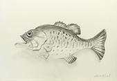 画筆練習生1-10:7魚裝飾物鉛筆素描20160428.jpg