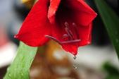 Xuite活動投稿相簿:含淚的花兒