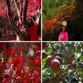 福壽山農場...剛出爐的..燒耶.楓紅滿山頭:相簿封面