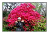 2013-陽明山花季:無以倫比的杜鵑