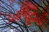 福壽山農場...剛出爐的..燒耶.楓紅滿山頭: