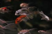 魚的世界: