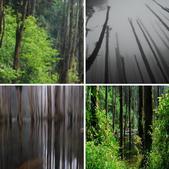 霧中精靈.....忘憂森林:相簿封面