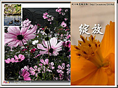 Xuite活動投稿相簿:file