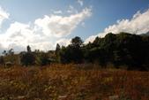 福壽山農場...剛出爐的..燒耶.楓紅滿山頭:黃花