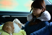花蓮三天親子遊~~第一站花東花海行: