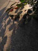 20101127陽光下的回憶:01IMG_0065.jpg