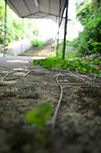 2014.06.04-07石垣島四天三夜自由行-DAY 2:DSC_8124.jpg