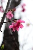 20110213櫻花祭-初春:DSC_1521-s.jpg