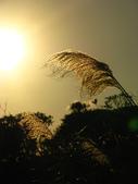 20090103陽明山:IMG_0578