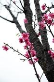 20110213櫻花祭-初春:DSC_1507-s
