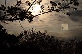 20140216春櫻:DSC_1699.jpg