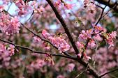 20140216春櫻:DSC_1703.jpg