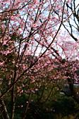 20140216春櫻:DSC_1719.jpg