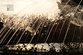 20140216春櫻:DSC_1728.jpg
