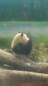 105-06-12_動物園&貓空:DSC_7486.JPG