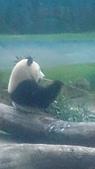 105-06-12_動物園&貓空:DSC_7487.JPG
