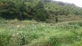 105-06-11_陽明山:DSC_7471.JPG