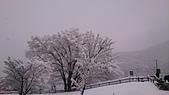 104-12-28_日本北陸5日遊(手機_Lisa):DSC_6867.JPG