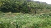 105-06-11_陽明山:DSC_7470.JPG