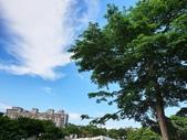 2020.05.30 桃園陽明運動公園:2020.05.30 陽明公園  (27).jpg