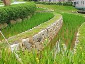 2020.09.10 桃園大有梯田生態公園:2820.09.10 大有梯田生態公園  (6).jpg
