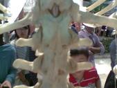人體骨頭展_2004拍照:人體骨頭展_2004拍照  (2).jpg