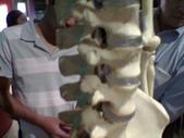 人體骨頭展_2004拍照:人體骨頭展_2004拍照  (18).jpg