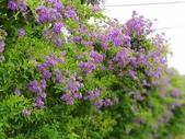 2018.04.21 紫色花牆:2018.04.21 紫色花牆 (43).jpg
