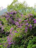 2018.04.21 紫色花牆:2018.04.21 紫色花牆 (58).jpg