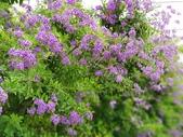 2018.04.21 紫色花牆:2018.04.21 紫色花牆 (26).jpg