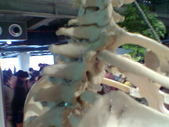 人體骨頭展_2004拍照:人體骨頭展_2004拍照  (7).jpg
