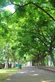 2017.05.03 城市裡的綠風景:2017.05.03 城市裡的綠風景 (19).jpg