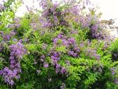 2018.04.21 紫色花牆:2018.04.21 紫色花牆 (53).jpg