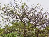 2018.04.11 大溪埔頂公園:2018.04.11 大溪埔頂公園 (8).jpg