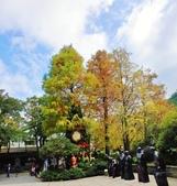 2019.12.23 耶誕快樂:2019.12.23 大板根森林遊樂區  (11).jpg