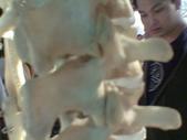 人體骨頭展_2004拍照:人體骨頭展_2004拍照  (12).jpg