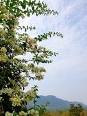 2020.04.18 油桐花開:2020.04.18 大溪花海農場  (106).jpg