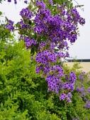2018.04.21 紫色花牆:2018.04.21 紫色花牆 (4).jpg