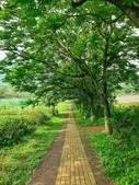 2020.04.18 油桐花開:2020.04.18 大溪花海農場  (121).jpg