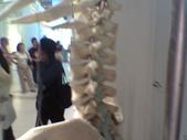 人體骨頭展_2004拍照:人體骨頭展_2004拍照  (14).jpg