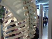 人體骨頭展_2004拍照:人體骨頭展_2004拍照  (15).jpg