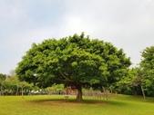 2018.04.11 大溪埔頂公園:2018.04.11 大溪埔頂公園 (10).jpg
