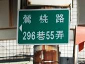 2019.10.16 鶯歌區永吉公園:2019.10.16 蒜香藤 (19).jpg