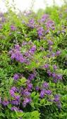2018.04.21 紫色花牆:2018.04.21 紫色花牆 (56).jpg