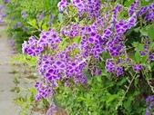 2018.04.21 紫色花牆:2018.04.21 紫色花牆 (13).jpg