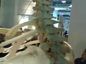 人體骨頭展_2004拍照:人體骨頭展_2004拍照  (16).jpg